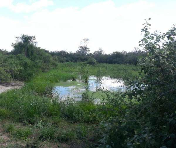 Paraguay: sale 78.000 hectares forest and natural field.