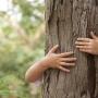 Professional Tree Care
