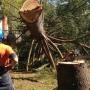 Tree Care Jobs Melbourne
