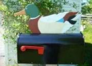 bird mailboxes