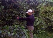 Puerto Rico Best Coffee
