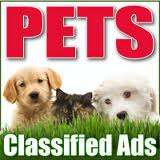Pet classifieds--------pet for sale