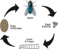 Can?t control pest and termites? hire us as a reliable solution