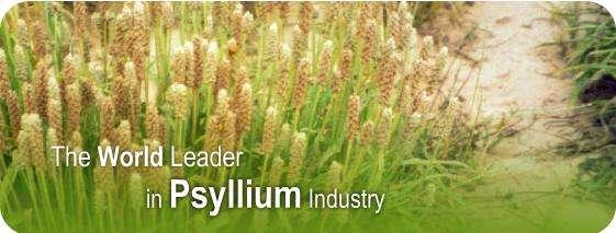 Kadam exporters premium quality psyllium and products
