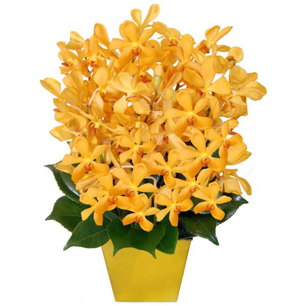 Melbourne florist - congratulations flowers delivery in melbourne