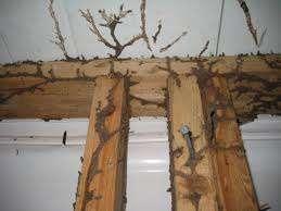 Best termite control companies sydney