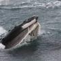 Best Whale Watching Merimbula