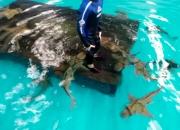 Sea life aquarium- amazing tourist attraction in melbourne