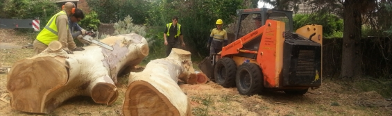Tree removal services in adelaide