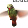 Quality & Affordable Web Design Service in Ballina