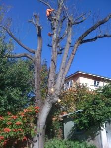 West coast arbor service-tree cutting services perth
