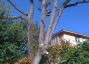 West Coast Arbor Service-Tree cutting services perth