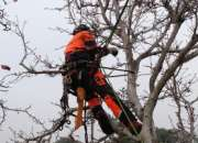 Tree Removals in Melbourne
