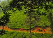 Heart of south india tour