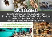 Termite management services Adelaide | Adelaide Plains Pest Services
