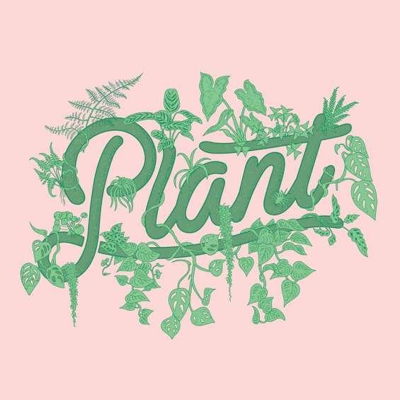 Plant by packwood - terrarium shop & plant supplies